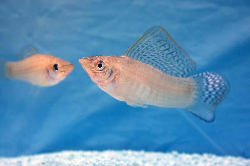 Fische-web3